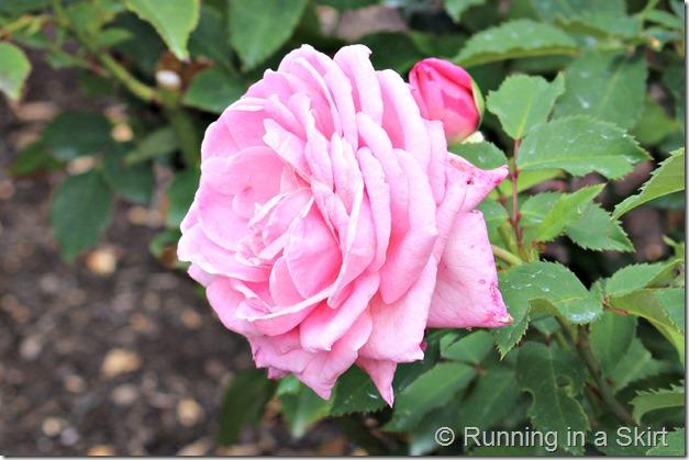 Biltmore_Gardens_2