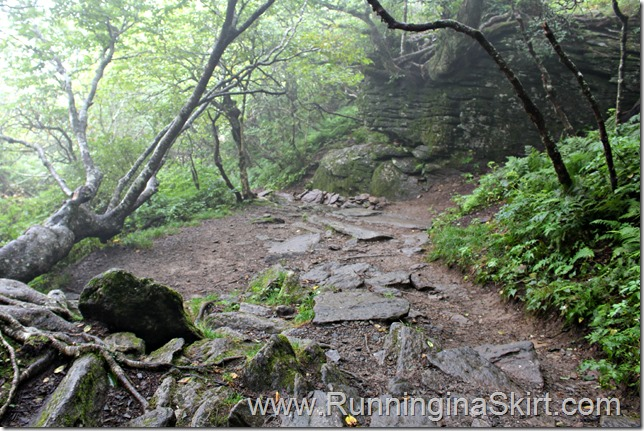 craggy_pinacle_trail_3