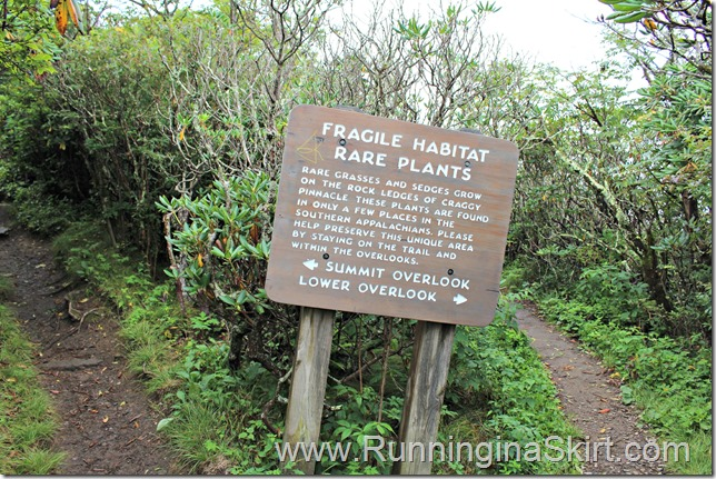 craggy_pinacle_trail_divide