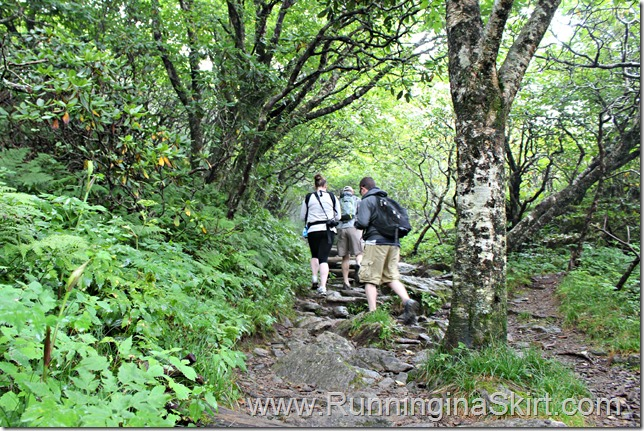 craggy_pinacle_trail