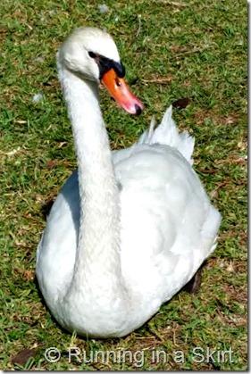 lake ealo duck 2