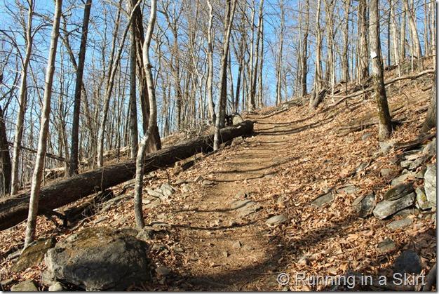 Bearwallow Mountain-5-3