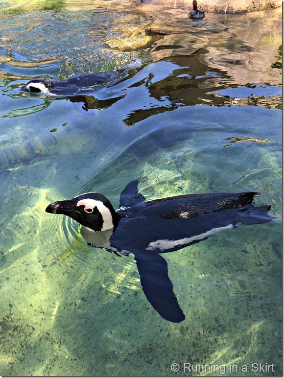 national aviary penguin