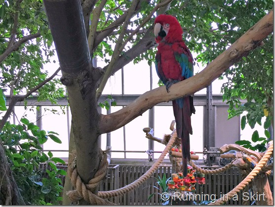 national aviary scarlett mccaw