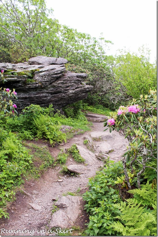 craggy gardens hike-117-6