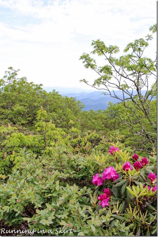 craggy gardens hike-129-10