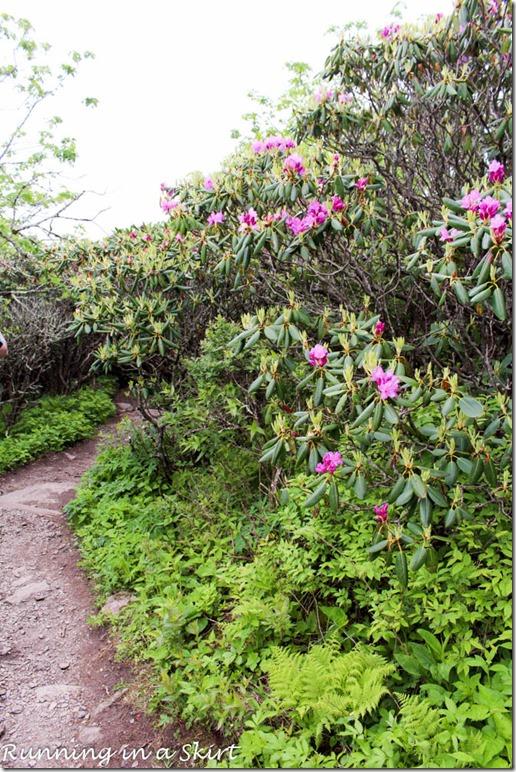 craggy gardens hike-163-14