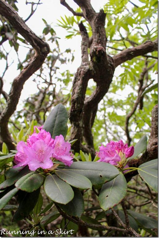 craggy gardens hike-50-3