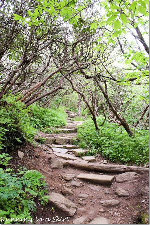 craggy gardens hike-61-5