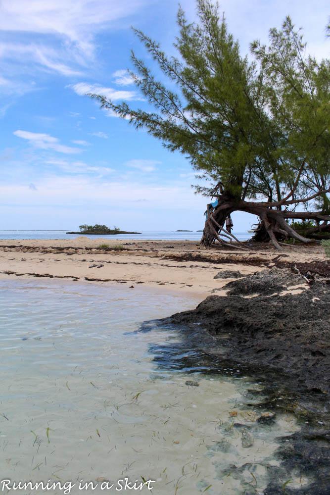 Bahamas, Elbow Cay, August 2015-500-18