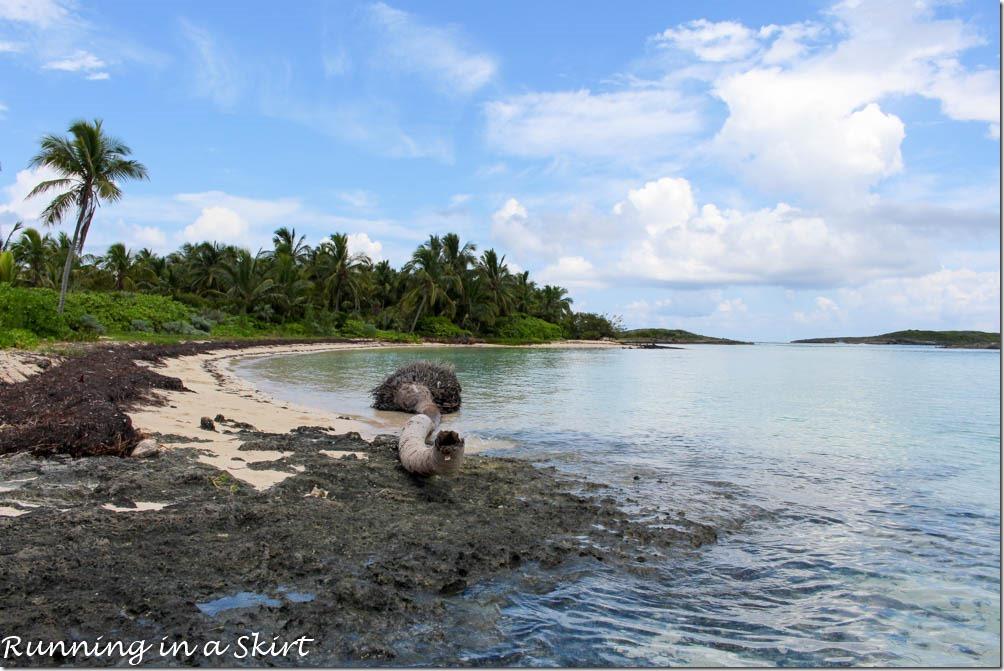 Elbow Cay Bahamas Tahiti Beach