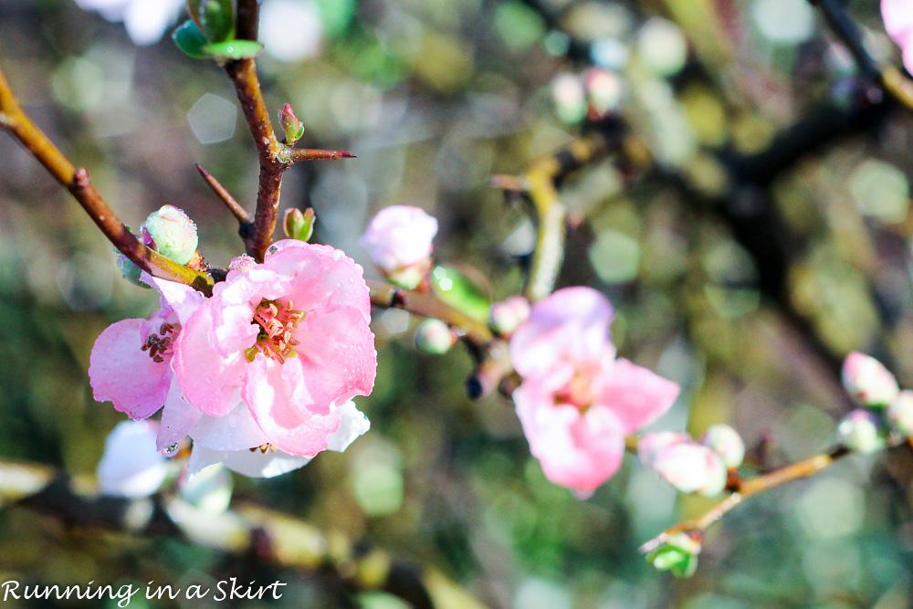 Biltmore Blooms-117-10