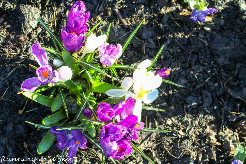 Biltmore Blooms-54-1