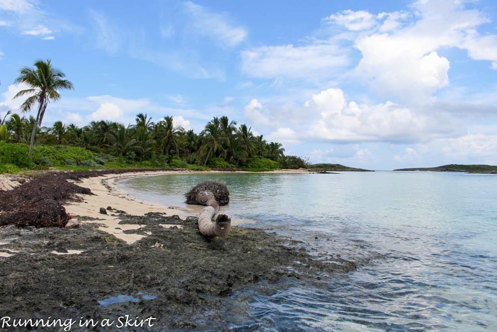Bahamas, Elbow Cay, August 2015-506-21