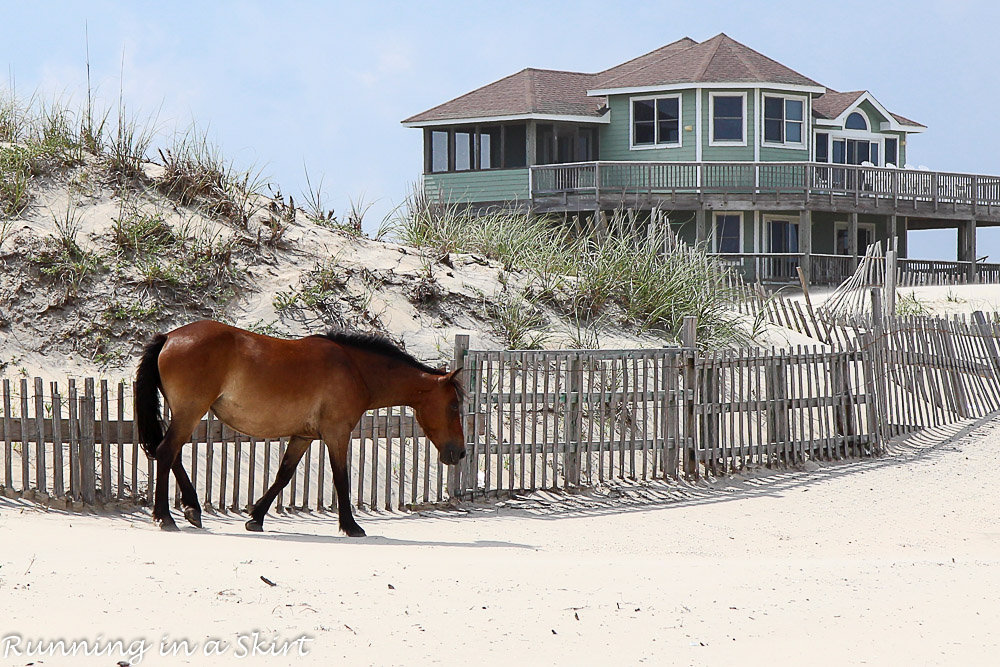 Outer Banks-394-27