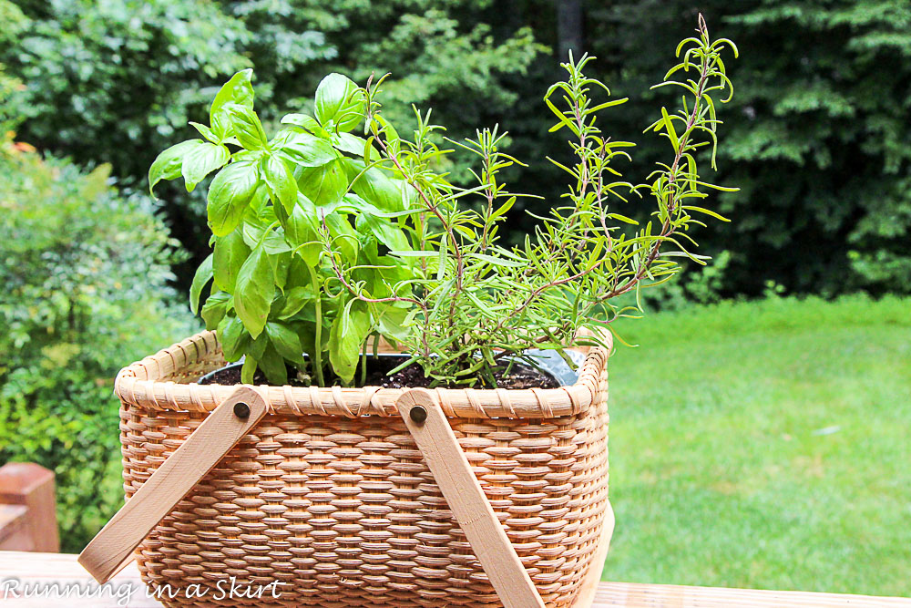 How To Make An Indoor Herb Garden Running In A Skirt