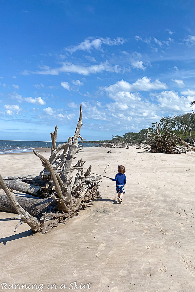 Boneyard Beach on Big Talbot Island State Park.
