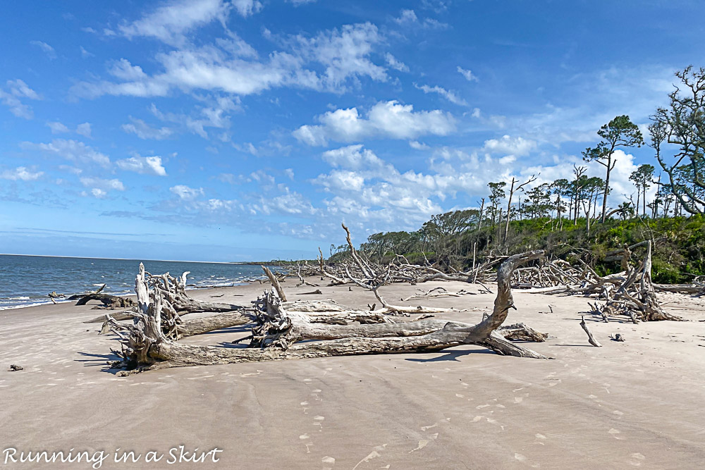 Driftwood trees on Boneyard Beach Florida.