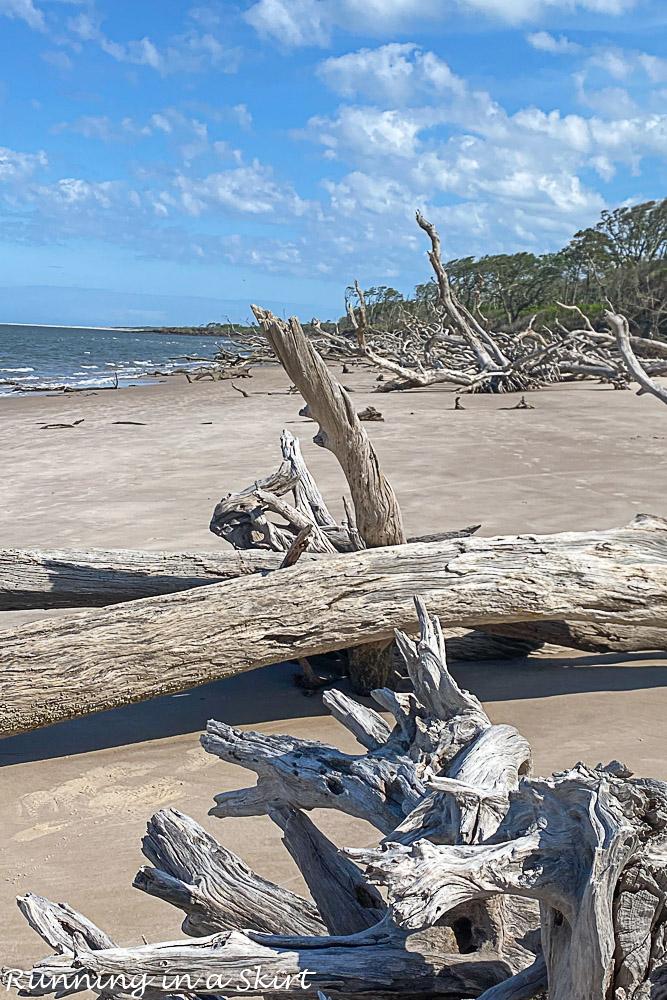 Driftwood on Boneyard Beach Florida at Big Talbot Island State Park.