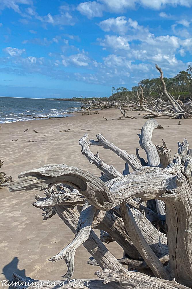 Closeup of driftwood on Boneyard Beach Florida.