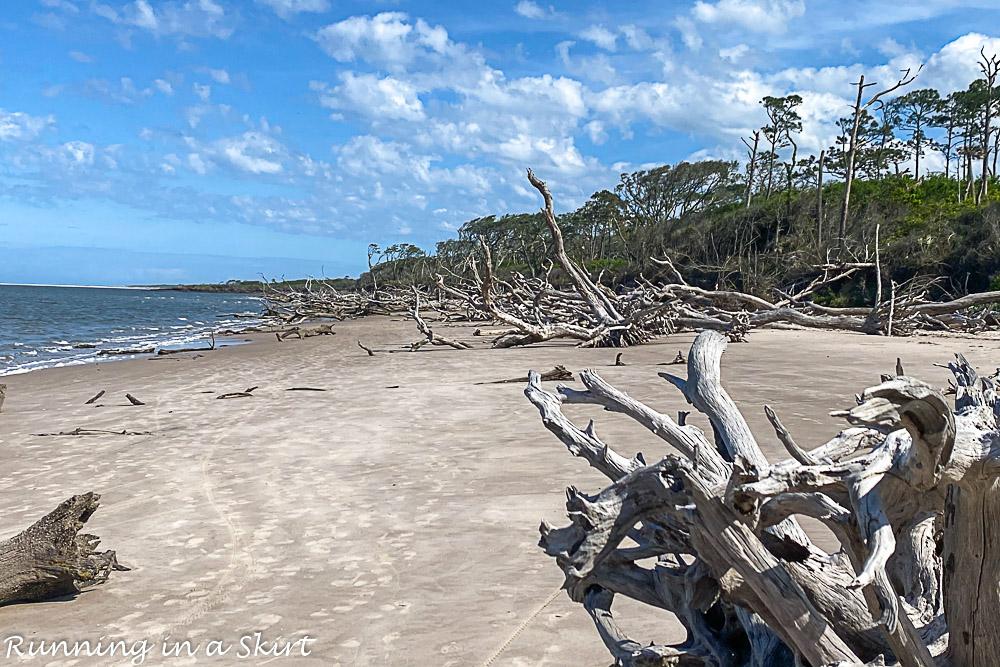 Wide shot of Boneyard Beach.