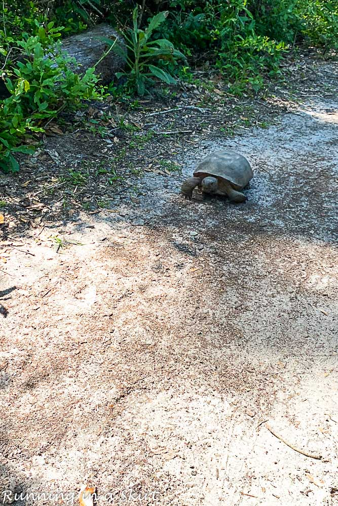 Turtle on the trail.