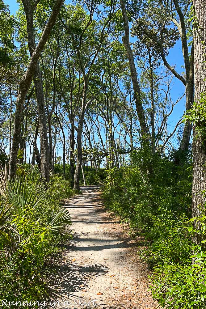 Tree canopy on the trail to get to Boneyard Beach Florida.