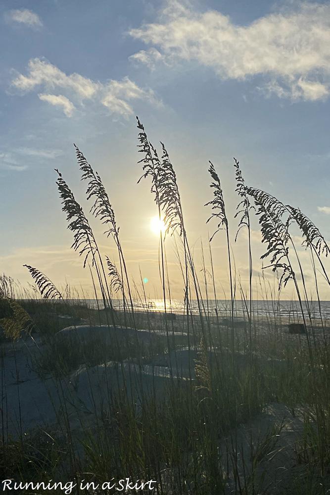 Hilton Head Island Travel Guide beaches with sea grass.