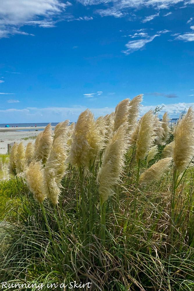 Sea grass on Saint Simons.